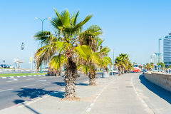 Sidewalk with palm trees Royalty Free Stock Photos