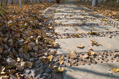 Sidewalk in the park Royalty Free Stock Image