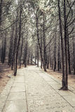 Sidewalk in the park Royalty Free Stock Photography