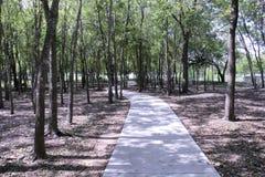 Sidewalk path through trees Royalty Free Stock Photo