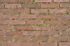 Sidewalk pavement made of bricks. Directly above view on sidewalk pavement made of bricks, with grass dry grass between them. Background royalty free stock images