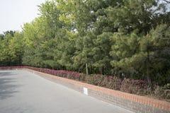 Sidewalk with pine tree Stock Photo