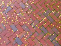 Sidewalk with fallen leaves Royalty Free Stock Photo