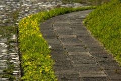 Sidewalk Street gardener in Guatemala, cetral america stock photography