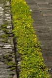 Sidewalk Street gardener in Guatemala, cetral america royalty free stock photos