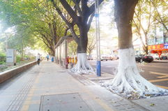 Sidewalk tree roots were painted white lime, safe over winter royalty free stock photos