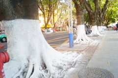 Sidewalk tree roots were painted white lime, safe over winter stock photo