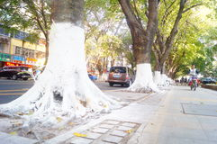 Sidewalk tree roots were painted white lime, safe over winter stock image