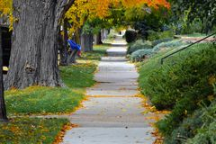 Sidewalk with trees. Sidewalk with yellow and orange leaves big trees and a child swing with green grass Royalty Free Stock Photo