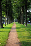 Sidewalk under the trees Stock Photo