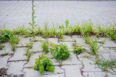 Sidewalk vegetation Stock Image
