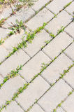 Sidewalk and vegetation Stock Photo