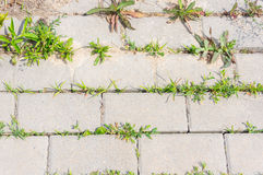Sidewalk and vegetation Royalty Free Stock Photo
