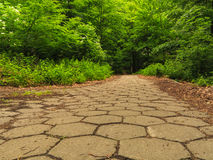 Sidewalk walking pavement in a park or forest Royalty Free Stock Image