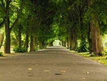 Sidewalk walking pavement in park. nature landscape. Stock Images