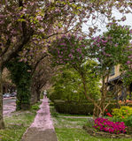 Sidewalk way in the city. Green sidewalk near quiet street under trees Royalty Free Stock Photos