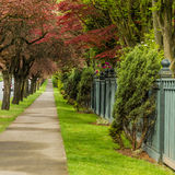 Sidewalk way in the city. Green sidewalk near quiet street under trees Stock Photo