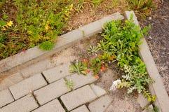Sidewalk weed Stock Image