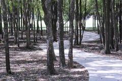 Sidewalk path through trees Stock Photography