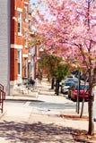 Sidewalks of Baltimore in spring, Maryland, USA stock image