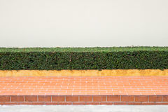 Sidewalks and Trim Shrubs Stock Photography