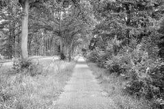 Sideway του δρόμου επαρχίας στη θερινή φύση Μονοπάτι με τα πράσινα δέντρα και χλόη στις πλευρές Κατεύθυνση και προορισμός στοκ φωτογραφία με δικαίωμα ελεύθερης χρήσης