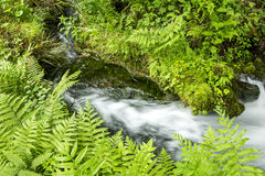 Sideways fast flowing brook Stock Photography