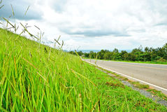 Sideways grass ,. Grass green roadside picture at day time Stock Images