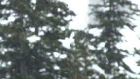 Sideways heavy snow stock video
