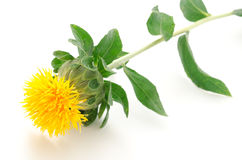 Sideways one safflower flower Royalty Free Stock Photo