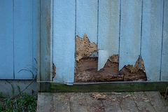 Siding with cracks and bug damage on side of home. Old cracked discolored siding on house in need or repair stock photo