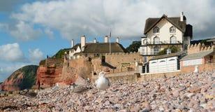 Sidmouth fotografía de archivo libre de regalías