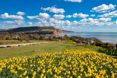 Sidmouth Dorset, England royaltyfria bilder