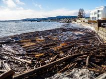 Sidney BC shore with driftwood after the windstorm. Vancouver Island, British Columbia, Canada Stock Photos