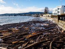 Sidney BC shore with driftwood after the windstorm. Vancouver Island, British Columbia, Canada Royalty Free Stock Images