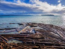 Sidney BC shore with driftwood after the windstorm. Vancouver Island, British Columbia, Canada Stock Photo
