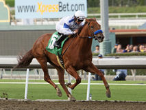 Sidney's Candy Wins The Sir Beaufort Stakes Stock Images