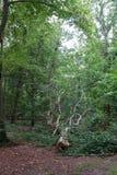 Sido árvore vista imagem de stock