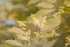 Sidor Royaltyfria Bilder