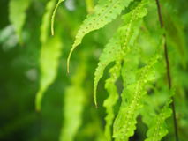 Sidor av det tropiska trädet Fotografering för Bildbyråer