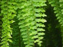 Sidor av det tropiska trädet Royaltyfri Foto