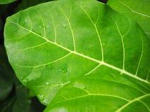 Sidor av det tropiska trädet Royaltyfri Bild
