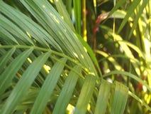 Sidor av det tropiska trädet som fortskrider vinden i aftonen lager videofilmer