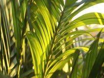 Sidor av det tropiska trädet som fortskrider vinden i aftonen arkivfilmer