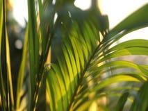 Sidor av det tropiska trädet som fortskrider vinden i aftonen stock video