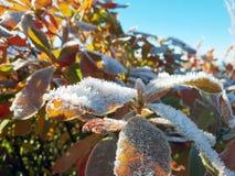 Sidor av en Bush som täckas med frostnärbild mot den blåa himlen royaltyfri foto