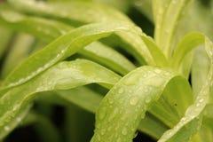 sidor av en härlig blomma efter morgonregnet royaltyfri foto