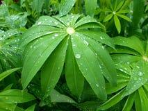Sidor av en härlig växt med droppar av fältregn royaltyfria foton