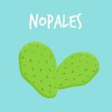 Sidor av en kaktus för taggigt päron kallar nopales Royaltyfri Foto