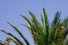 Sidor av en palmträd och en blå himmel Arkivfoton